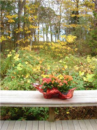 Pocasset (Wings Neck) Pocasset vacation rental - Large deck with water view perfect for grilling