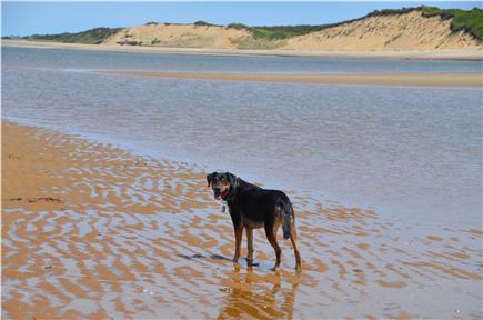 Wellfleet Cape Cod vacation rental - Dog Friendly Home