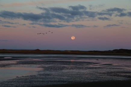 Chequessett Neck Wellfleet Cape Cod vacation rental - The moon and birds with CC bay beyond the gut