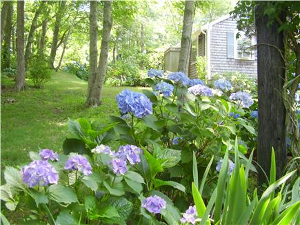 Orleans Cape Cod vacation rental - Wooded setting, view to outdoor shower