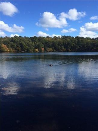Wellfleet Cape Cod vacation rental - Gulls Pond