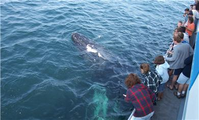 Eastham Cape Cod vacation rental - Whale Watching in Provincetown is half an hour away