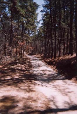 Wellfleet Cape Cod vacation rental - The road, Thoreau Way, looking East