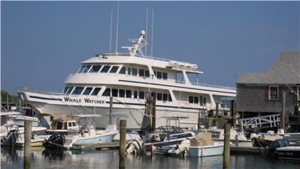 Barnstable Cape Cod vacation rental - The Whale Watch sales out of Barnstable Harbor & Deep Sea fishing
