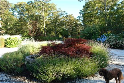 Brewster Cape Cod vacation rental - Lucy