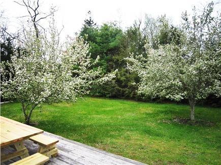 Harwich Cape Cod vacation rental - Backyard