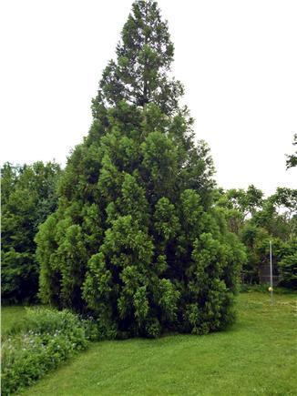 Barnstable Cape Cod vacation rental - Climb the tree; play tetherball