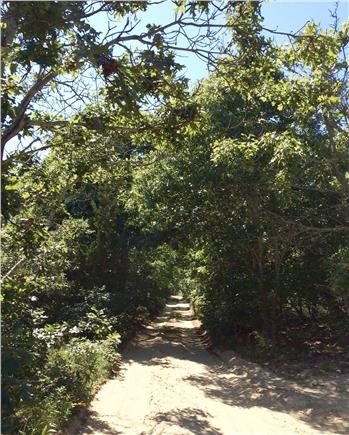 North Eastham Cape Cod vacation rental - Path towards beach from end of driveway