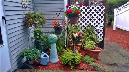 West Harwich Cape Cod vacation rental - Enjoy the flowers in the backyard