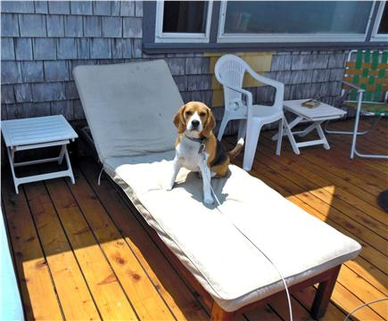 Plymouth MA vacation rental - ''Pet Friendly''