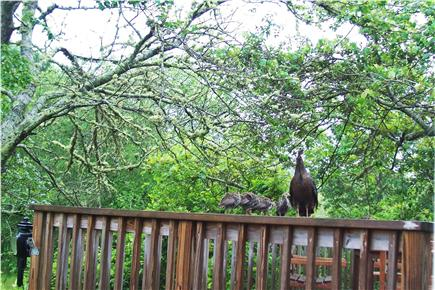 South Harwich Cape Cod vacation rental - Wildlife on the Deck