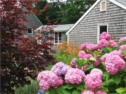 Harwich Port Cape Cod vacation rental - Beautiful hydrangeas greet you at the driveway