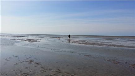 Eastham Cape Cod vacation rental - Low tide on the mile wide tidal flats at Boat Meadow Beach