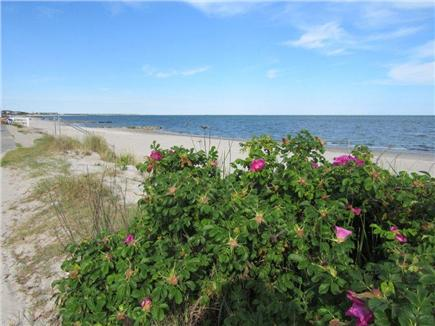 South Yarmouth Cape Cod vacation rental - 5 minutes to South Shore Drive-beautiful ocean beaches