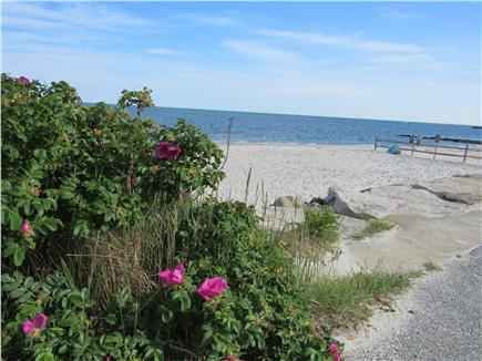 South Yarmouth Cape Cod vacation rental - In popular summer destination neighborhood