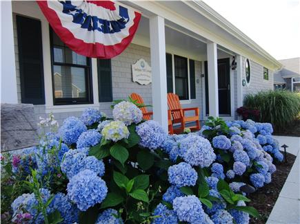 Wellfleet Harbor Cape Cod vacation rental - Bountiful Hydrangeas Welcome Guests Back to Sandpiper Hill