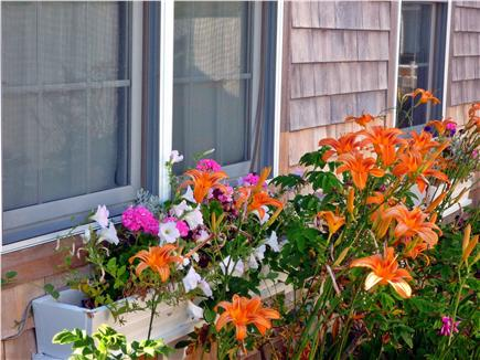 West Yarmouth, MA  Cape Cod Cape Cod vacation rental - The window box in front of the cottage.