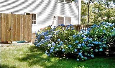 Brewster Cape Cod vacation rental - Outside Deck, new outside shower and back yard
