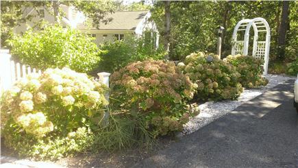 Harwich Cape Cod vacation rental - Lot's of privacy, front entrance - plenty of Hydrangeas