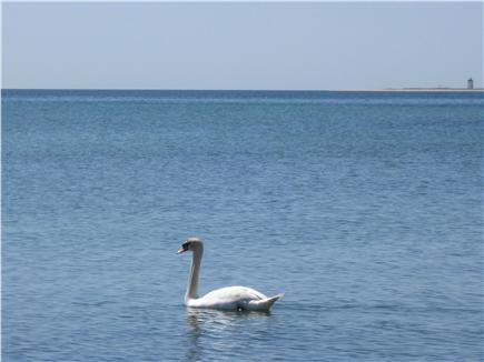 Provincetown Cape Cod vacation rental - Just dropped by