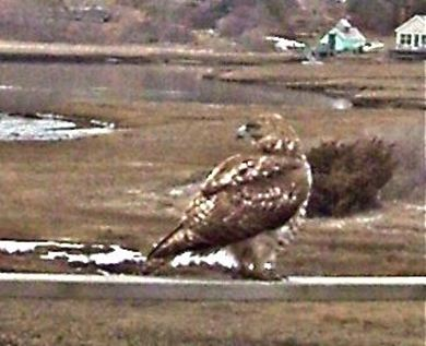 Chatham Cape Cod vacation rental - Winter view - hawk on deck railing
