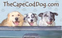 The Cape Cod Dog