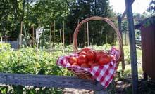 Cape Abilities Farm
