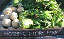 Morning Glory Farm