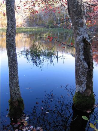 West Tisbury Martha's Vineyard vacation rental - Walking trail at Cedar Tree Neck Sanctuary