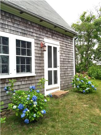 Chilmark, Menemsha Martha's Vineyard vacation rental - Hydrangeas in bloom July 4th wknd, on the east side of the house.