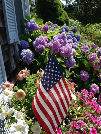 Aquinnah Martha's Vineyard vacation rental - Hydrangeas and roses bloom around this traditional Cape home