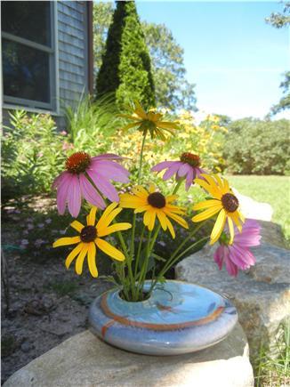 West Tisbury Martha's Vineyard vacation rental - Flower bed off screened porch
