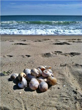 Mid-island Nantucket vacation rental - Fishermen's Beach--2.2 miles away (betwn Nobadeer & Surfside)