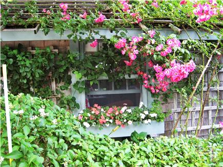 Siasconset Nantucket vacation rental - Rose-covered cottage