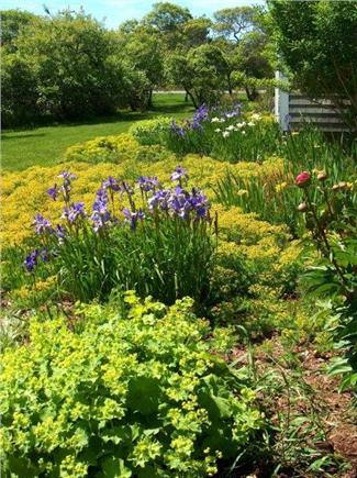 Tom Nevers East Nantucket vacation rental - Our gardens & yard...a beautiful setting...time to unwind